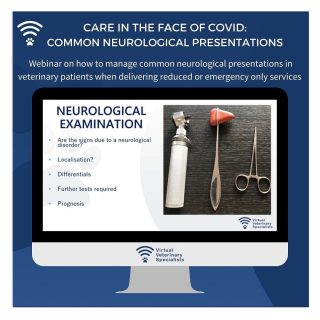 **Veterinary Care in the Face of COVID: Common Neurological Presentations - what is an emergency and what can wait?**   To those who didn't have time to watch them in the first lockdown, a reminder that we have a number of webinars available for free on @thewebinarvet. By watching the webinar on The Webinar Vet you can download your CPD certificate afterward. Alternatively, you can also watch this webinar directly on our YouTube page with no need to register.   Link in bio   In this really useful webinar, Dr Simona Radaelli provides clear and practical guidelines on how to triage and manage neurological emergencies during the COVID-19 restrictions.   If you would like clinical advice over this period and some specialist support do remember specialist case advice calls are available in all of our specialist disciplines from £60+VAT. Suitable for any case that would benefit from specialist input. There is no need to register or sign up, this service is available as a one-off, as and when you need it.   If you would like to arrange a case advice call with one of our specialists please email info@vvs.vet or use the 'refer a case' link on our website (https://vvs.vet/refer-a-case/) and we will be in touch.   Specialist written case reports are also available as a one-off submission for £80 + VAT.   Submit the case history here: https://vvs.vet/refer-a-case/   For further information please visit www.vvs.vet   #workingtogether #solechargesupport #veterinarycare #veterinarymedicine #virtualvet #virtualspecialist #virtualreferral #veterinarycpd #vetcpd #veterinarylearning #veterinaryeducation #teamvet #veterinaryneurology