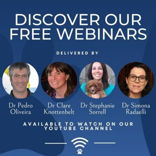 💻 Have you watched our webinars? 💻  Catch up on all of the webinars available for FREE on our Youtube channel (Link in Bio). From cardiology to cancer, seizures to skinny cats. They range from bite size webinars of only 15 minutes, to in-depth 1 hour webinars offering a wealth of clinical hints and tips.   Available webinars include:  * 'Ventricular arrhythmias' with Dr Pedro Oliveira  * 'Is cancer an emergency?' with Dr Clare Knottenbelt  * 'Respiratory patterns' with Dr Pedro Oliveira  * 'When is weight loss and emergency' with Dr Stephanie Sorrell  * 'Congestive heart failure in cats' with Dr Pedro Oliveira  * 'Common neurological presentations' with Dr Simona Radaelli  To use the VVS service you do not need to register or subscribe. Any vet can have access to the VVS service, and our clinical services also count as CPD! We look forward to working with you to achieve great outcomes together.   #virtualreferral #virtualvet #veterinaryreferral #veterinarycpd #virtualspecialist #veterinaryspecialist #veterinarylearning #vvs #veterinarywebinars #bsava2021 #veterinarymedicine #teamvet #vetmed